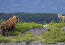 خرس ها