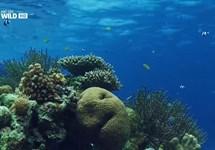 حیات وحش اندونزی :جزایر هیولاها