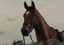 اسب جنگی