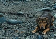 مسیر بازگشت یک سگ به خانه