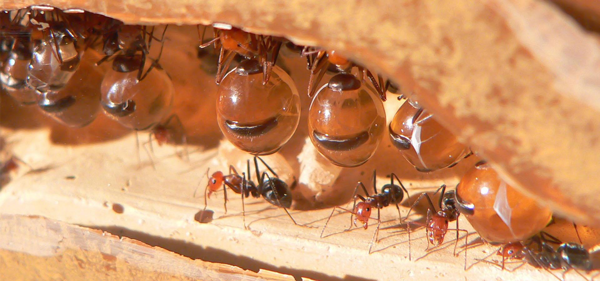 امپراطوری مورچه های صحرایی (مستند)