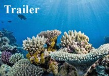 پیشنمایش به دنبال مرجانها