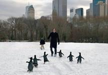 پنگوئن های آقای پاپر