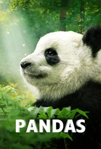 پانداها