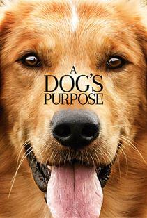 هدف یک سگ